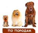 /Royal_Canin_special_dog9.jpg