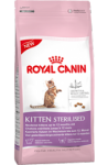 rc_kitten_sterilised